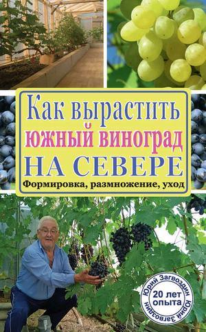 ЗАГВОЗДИН Ю. Как вырастить южный виноград на севере