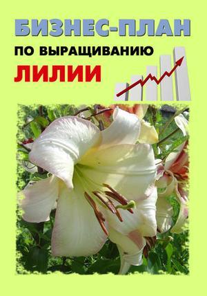 БРУЙЛО А., ШЕШКО П. Бизнес-план по выращиванию лилии