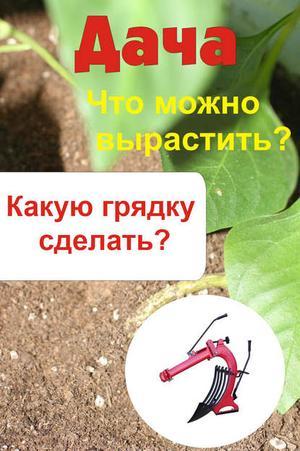 Мельников И. Что можно вырастить? Какую грядку сделать?